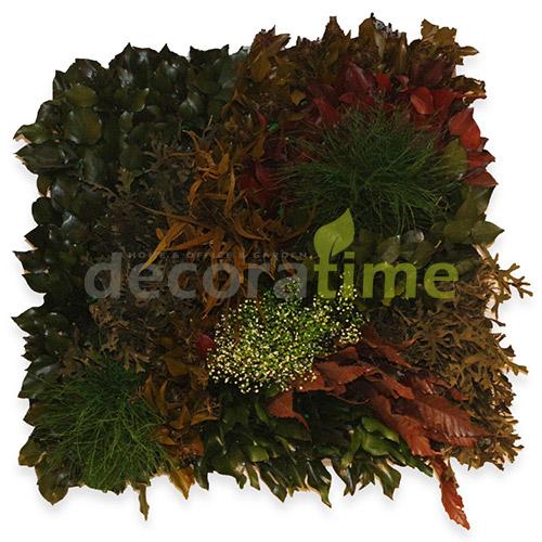 Mumyalanmış bitki, Mumyalanmış yosun, Şoklanmış bitki, Şoklanmış yosun, Stabilize bitki, Stabilize yosun, Duvar dikey bahçe, Duvar yosun bahçe Dikey bahçe, Yosun, Moss, Bitki – plants, Yosun duvar, Bitki duvar